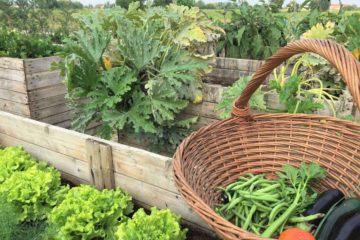 I legumi biologici dell'orto di Borgogelsi